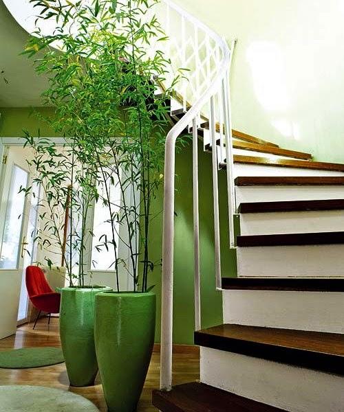 Plants-04